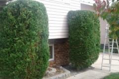 hedging-01