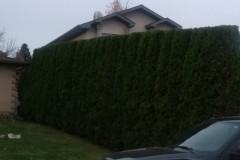 hedging-02
