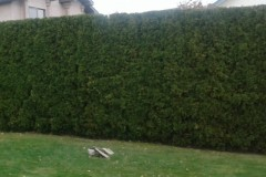 hedging-03