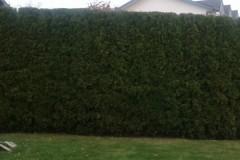 hedging-04