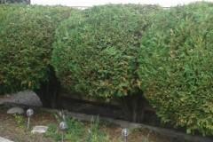 hedging-05