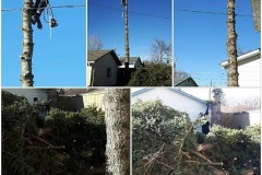 tree-cutting-03