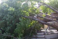 tree-cutting-08