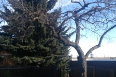 tree-prunning-01