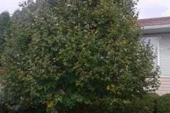 tree-prunning-02
