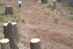 tree-removal-10