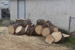 tree-removal-12